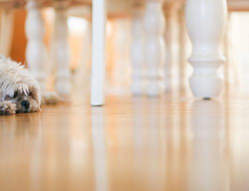 Flooring Alexandria VA – Homeowner Helpful Advice For 2020