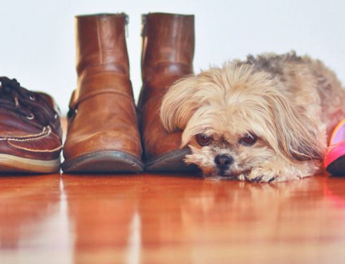 Helpful Advice on Hardwood Floor Refinishing in Fairfax VA for 2020
